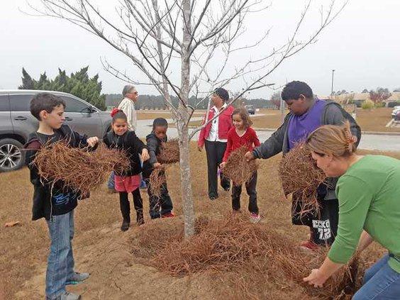 Blaney - Arbor Day Web