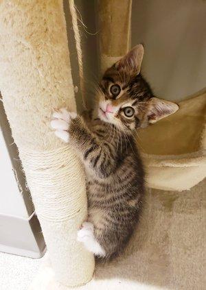 Kitten - 5-24-19
