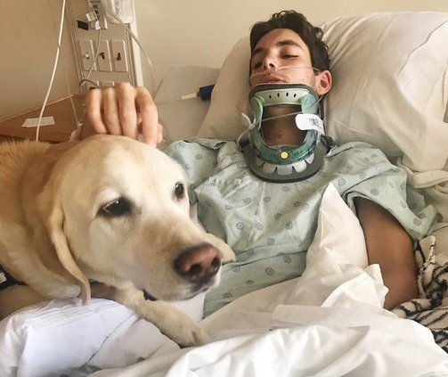 KP - Therapy Dog